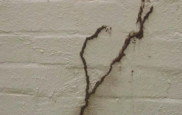 Cara menghilangkan rayap di dinding