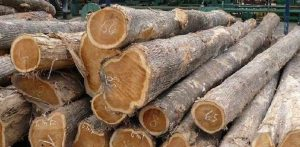 Gambar Jenis Kayu Anti Rayap, kayu jati