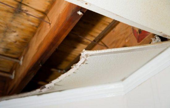 Cara membasmi rayap di plafon rumah agar tidak ambrol