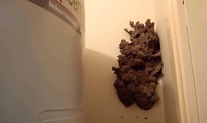 Gambar cara membasmi rayap tanah