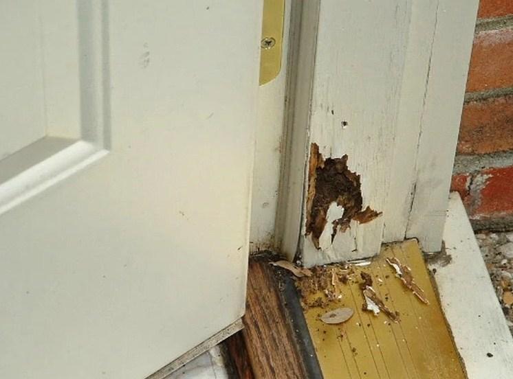 Gambar cara mengatasi rayap di kusen pintu