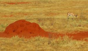 Gambar Cara Membasmi Rayap dalam Tanah