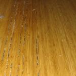 Cara Menghilangkan Rayap di Lantai Sampai Tak Bersisa