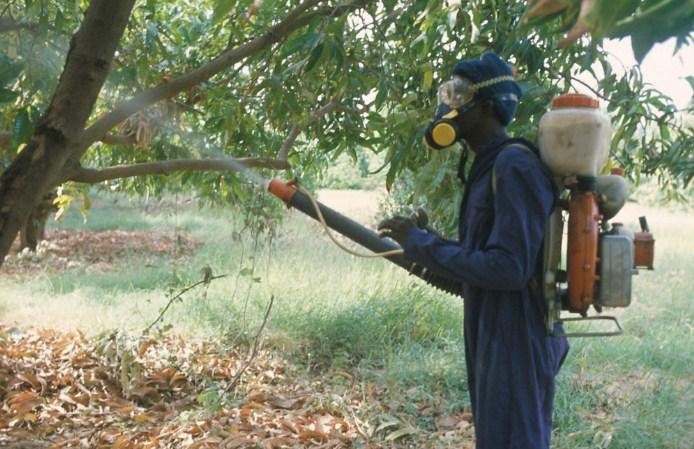 Cara membasmi rayap pada tanaman perkebunan