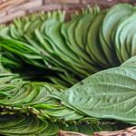 5 Obat Rayap Tradisional, Membasmi Hama Secara Alami