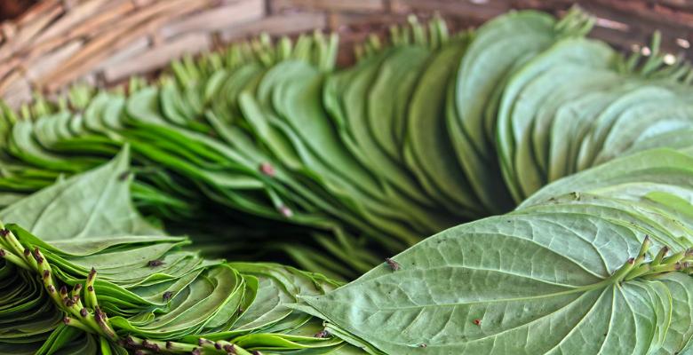 Gambar Obat Rayap Tradisional dari daun sirih dan daun pepaya