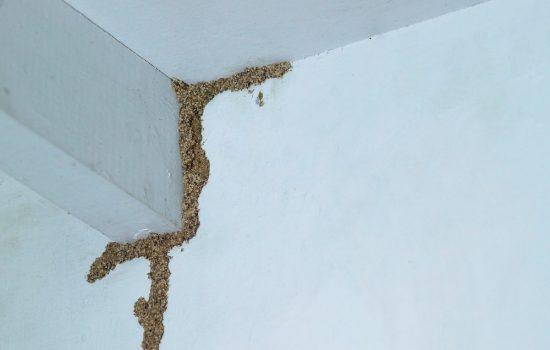 Solusi Aman Cara Menghilangkan Rayap di Tembok